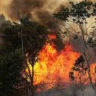 Burning Up: The Amazon Rainforest